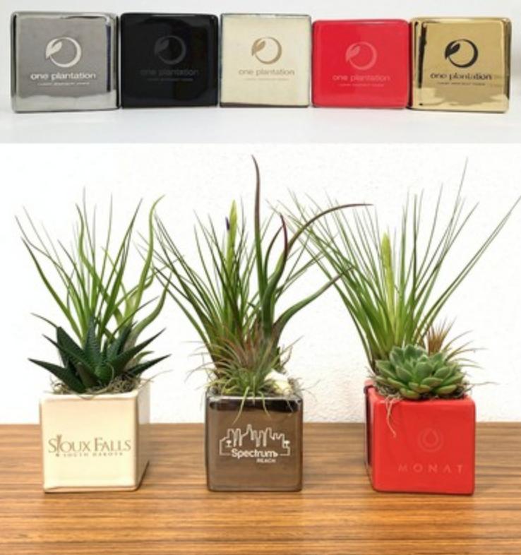 personalized succulent pots as weddings favors